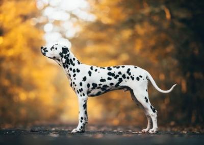 Psi exteriér